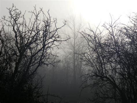 wallpaper dark tree trees dark forest 1600x1200 wallpaper nature forests hd