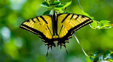 imagenes mariposas de colores mariposas de colores