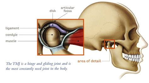 signs of jaw bone disease ehow ehow how to tmj disorder therapy tmd dentist london ontario