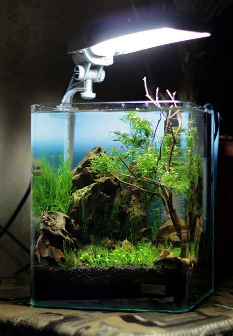 Cube Aquarium Aquascape by Dennerle Nano Cube 174 Contest 2013 Quality Test Results