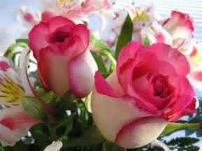 beautiful bouquet of flowers beautiful flower bouquet img wallpaper