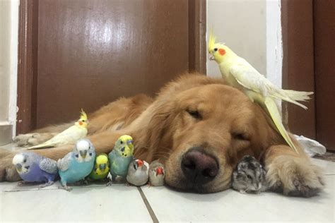 county my and his friends in the golden age of make believe books bob the golden retriever and his friends