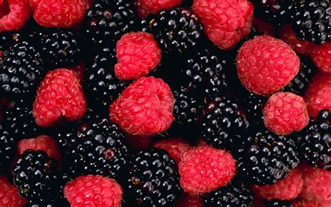 fruit or berry blackberry fruit wallpaper 2560x1600 wallpoper
