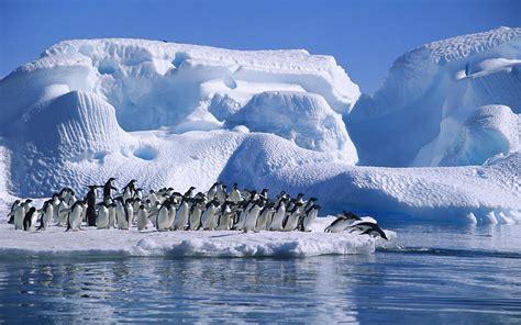 dive gratis file adelie penguins diving bay jpg wikimedia commons