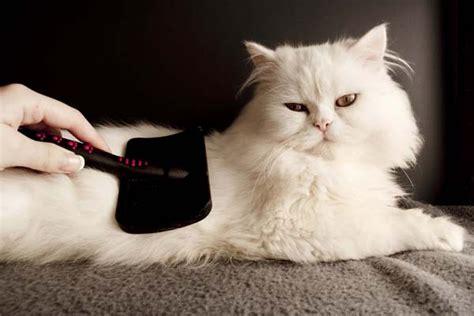 is your cat okay catster