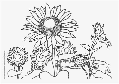 coloring pages of fall flowers nature coloring pages for
