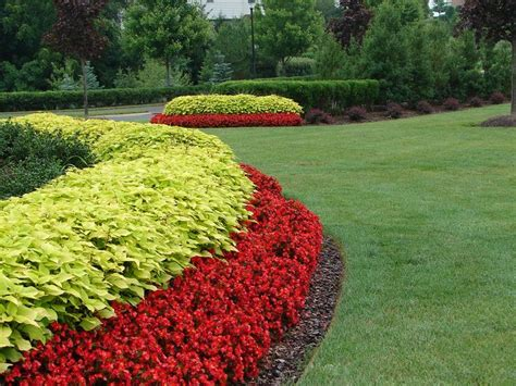 red begonia  yellow coleus installed  maintained