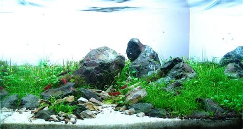 Aquascapes Com Timo W 252 Nsche And Aquascaping Aqua Rebell