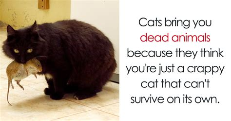 10 amazing cat facts that you probably didn t