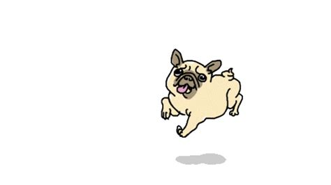 pug animation pug animated gif pictures best animations