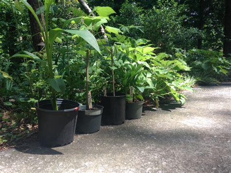 fall plants fall plant kickoff saleabration atlanta 2016