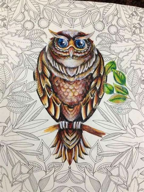 secret garden coloring book owl 78 images about johanna basford owl on a branch