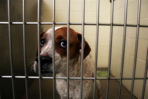 pound dogs 6 myths about shelter pets