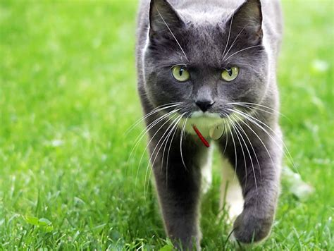 backyard cat when to be alarmed when your outdoor cat disappears the