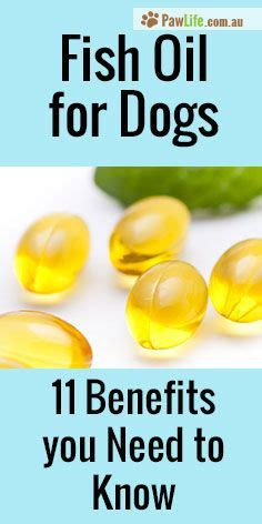 benefits of fish for dogs 25 best ideas about fish benefits on fish vitamins benefits of