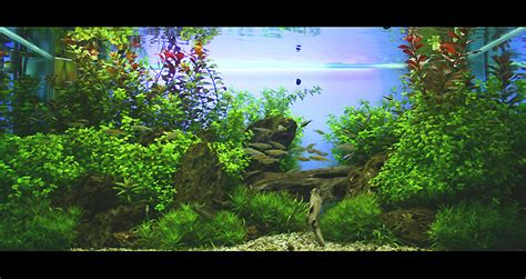 Oliver Knott Aquascaping by Oliver Knott Aquariumdesigner Weltmeister Aquascaping
