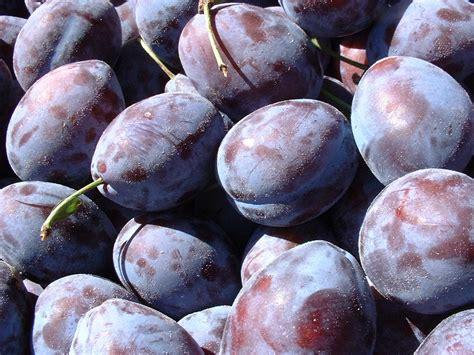 fruits prune bienfait nutrition et recette