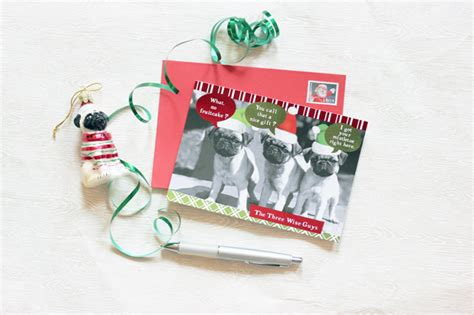 northern illinois pug rescue it s a merry the pug run donation totals announced cluboat