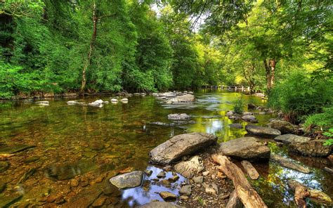 wallpaper river water rocks trees clear river trees rocks wood wallpapers clear river