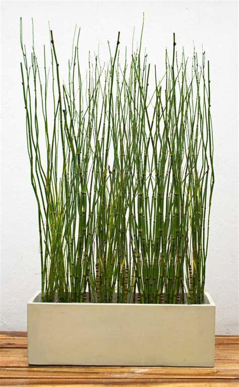 decoracion de interiores con plantas de sombra plantas de sombra opciones decoracion planos para macetas