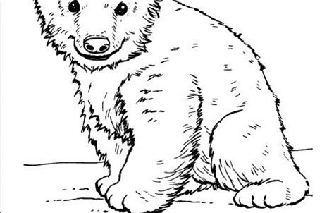 animal planet coloring pages alphabet fun pinterest