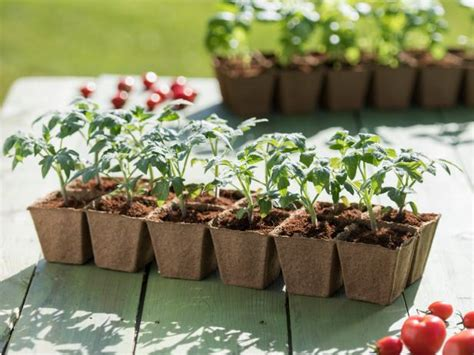 Gardener S Supply Seed Starting Planting Tomatoes From Seed Diy Network Made