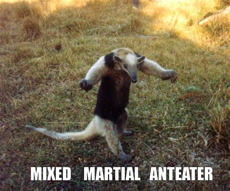 Anteater Meme - image 746 i m an anteater know your meme