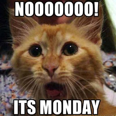 i it s monday but nooooooo its monday pictures photos and images for