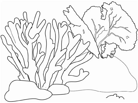sketch coral reef fish coloring pages