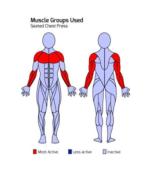 muscle groups used in bench press triactive america e line seated chest press