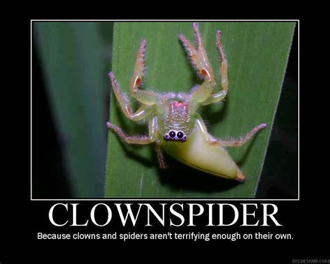 Scary Spider Meme - clownspider because clowns and spiders aren t terrifying