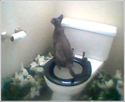 how does it take to toilet a how does it take to toilet a border collie puppy