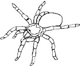 spider coloring page 9 free animal spider coloring pages