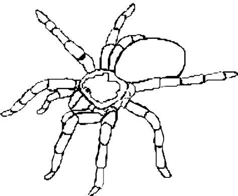 9 free animal spider coloring pages