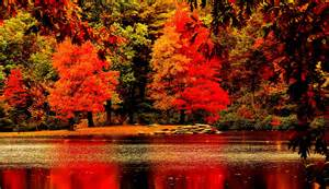 In Fall reflections of autumn trees nature fall stock images and illustrations