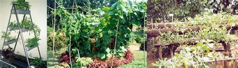 Vertical Garden Sri Lanka Vertical Gardens Sswm