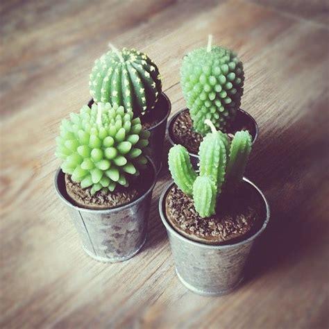 Mini Cactus mini cactus loft