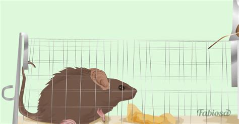 9 Things To Keep Away From Your by 9 Ways To Keep Mice Away From Home