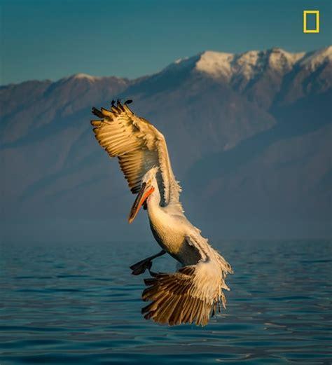 turn left national geographic    wildlife