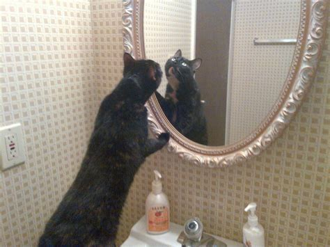 cat in bathroom list of things cats can get away with but people can t