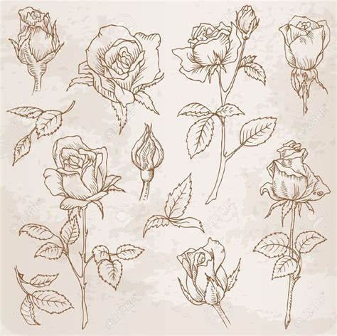 best 25 rose illustration ideas on pinterest rose art