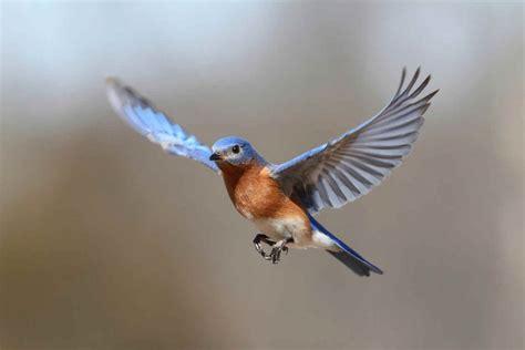 imagenes animales que vuelan 191 por qu 233 vuelan las aves batanga