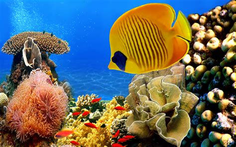pictures of colorful fish colorful fish hd pictures wonderwordz
