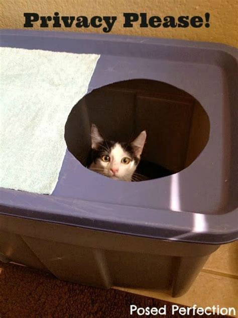 cat owners  ways  hide  litter box  plain sight