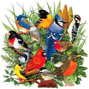 Backyard Animal Sounds Illinois State Bird Fat Finch Backyard Birds Birding