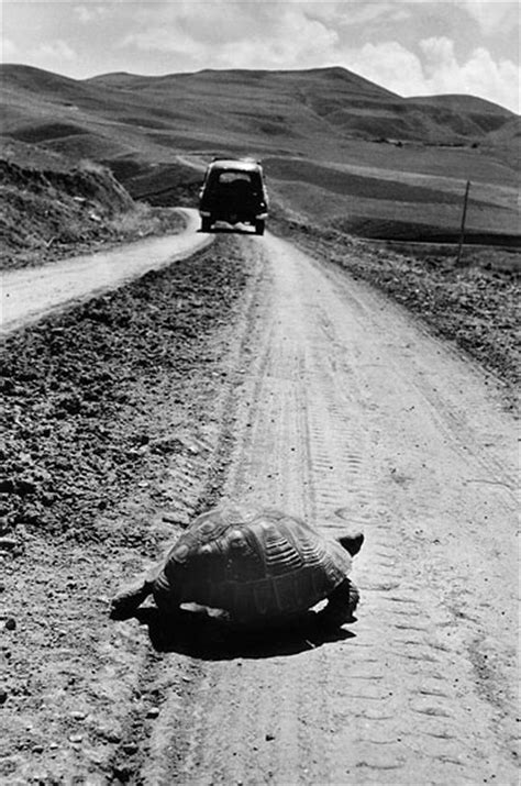 grapes of wrath turtle theme marc riboud s turtle on the road marc riboud