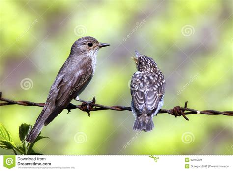 young bird with a parent stock image image 32255821