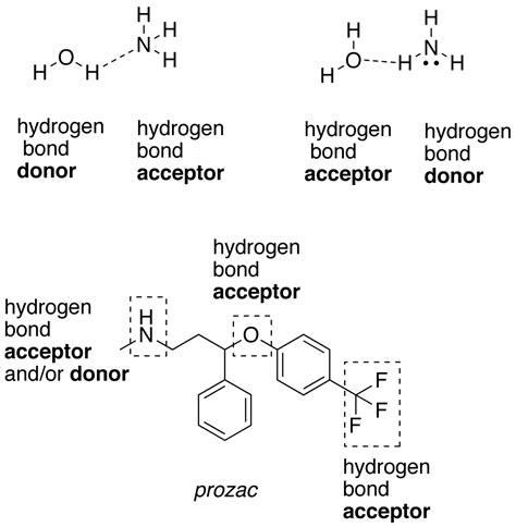 exle of hydrogen bond hydrophobic interactions learn biochemistry