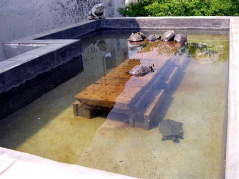 vasca per tartarughe grandi laghetto per 5 trachemys scripta