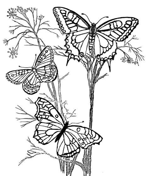 coloring books for grown ups butterflies mandala coloring book 604 best coloring pages images on